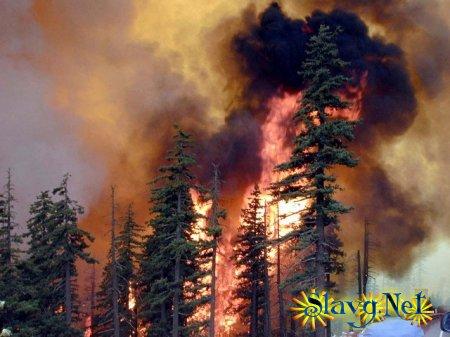 Из-за пожаров без жилья остались более тысячи жителей Алтайского края